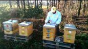 Ošetrovanie včelstva roztokom kyseliny šťavelovej