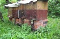 Rojenie včelstva