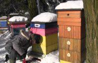 Včely v zime