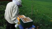 Jarná prehliadka včelstiev