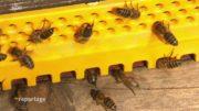 Zachránci včel