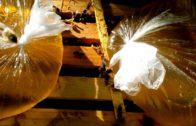 Recept na prípravok KAS-81 proti varroáze a nozematóze