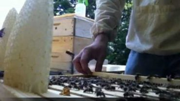 Bezrámikové včelárenie na divokom diele