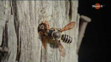 Tajomstvá včelstva