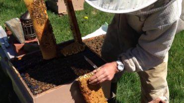 Vyrezávanie trubčieho plodu