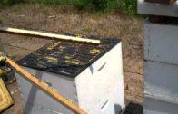 Získavanie propolisu