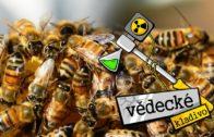 Proč včely vymírají? – Vědecké kladivo