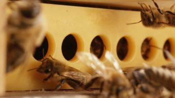 Varroa brána