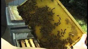 Nástavkové včelárenie