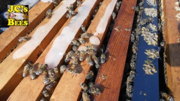 Kŕmenie včiel v zime