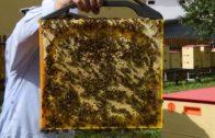 Včely v plaste, alebo nie je plast ako plást