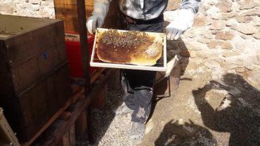 Slabé včelstvo a pokus, ako im pomôcť