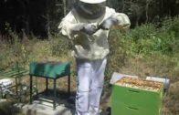 Výmena matky vo včelstve – 1. časť