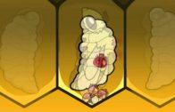 Životný cyklus klieštika vo včelstve